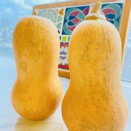 ウリ!うり!瓜科のかぼちゃ登場‼︎ ブログ やさいのおへや~JA ...